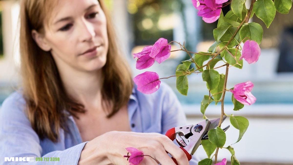 FELCO 15 tỉa cắt cành hàng rào, hoa trong vườn