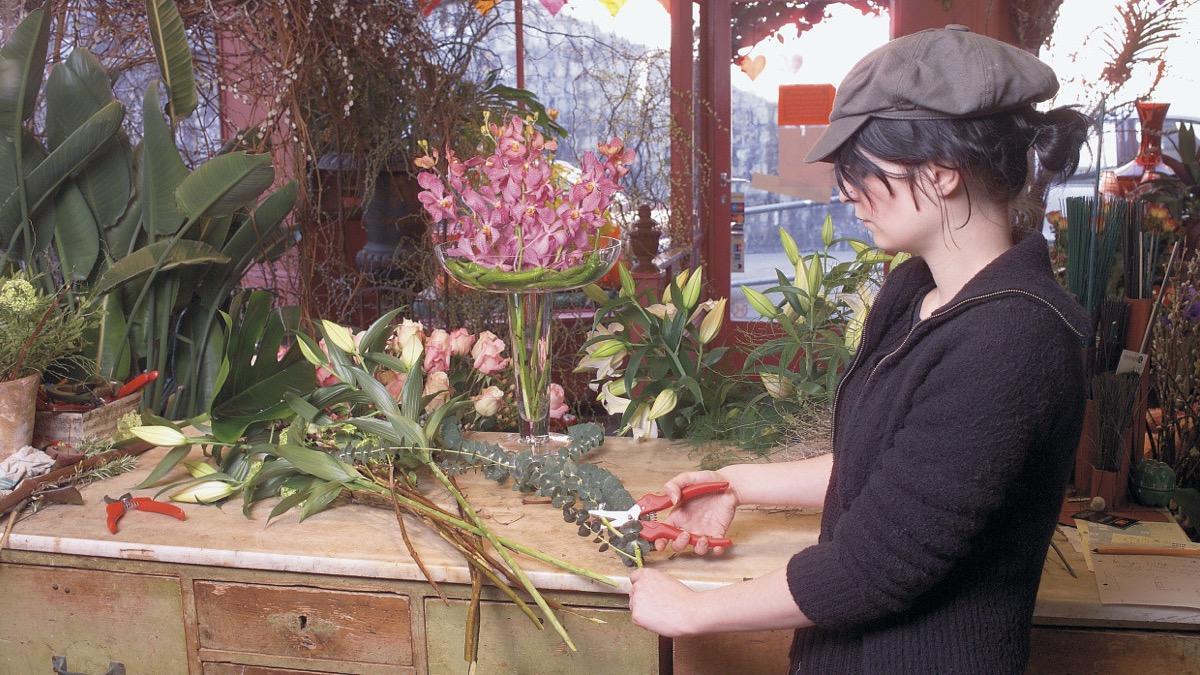 Cắt cành hoa lan, phong lan, cây cảnh bằng kéo tỉa cành FELCO 300