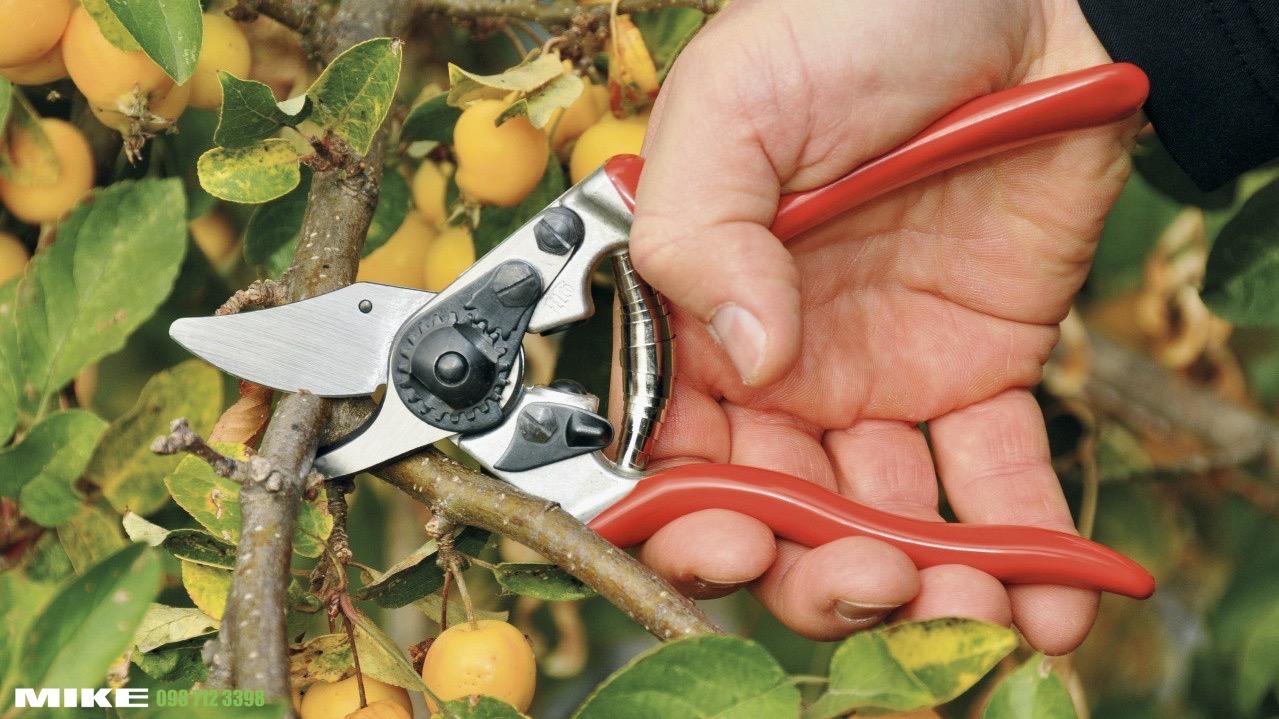 Kéo cắt cành FELCO 6 trong sản xuất nông nghiệp